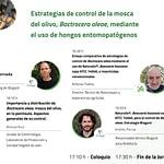 control-moscas-olivo