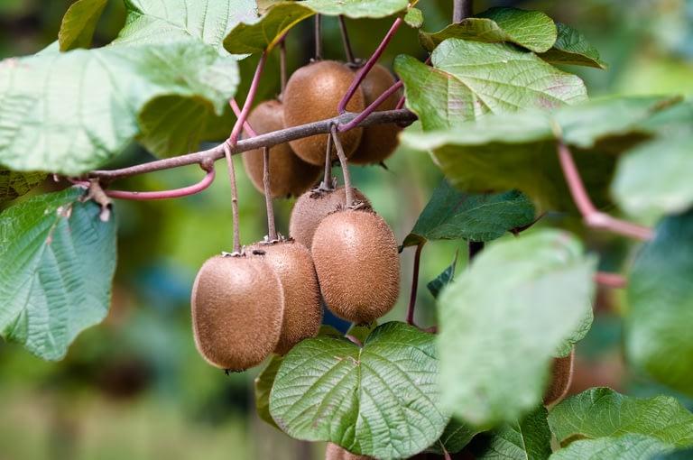 Biogard - Otros cultivos